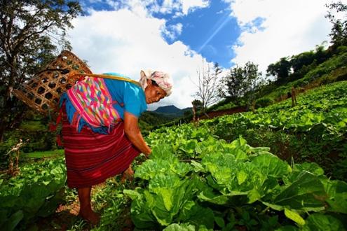 """สวพส. ชูงานวิจัย """"โลกร้อนกับเกษตรบนดอย"""" ปรับตัว -แก้ไขเมื่อเผชิญสภาพอากาศแปรปรวน"""