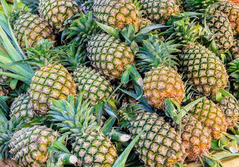 การผลิตสับปะรดผลสดส่งจำหน่ายต่างประเทศ