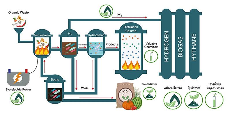 หัวเชื้อจุลินทรีย์ BioVis